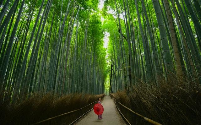 京都・嵐山の竹林